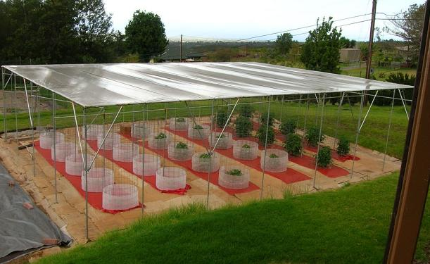 Build A Sun Amp Rain Shelter Used For Growing Tomatos In Hawaii