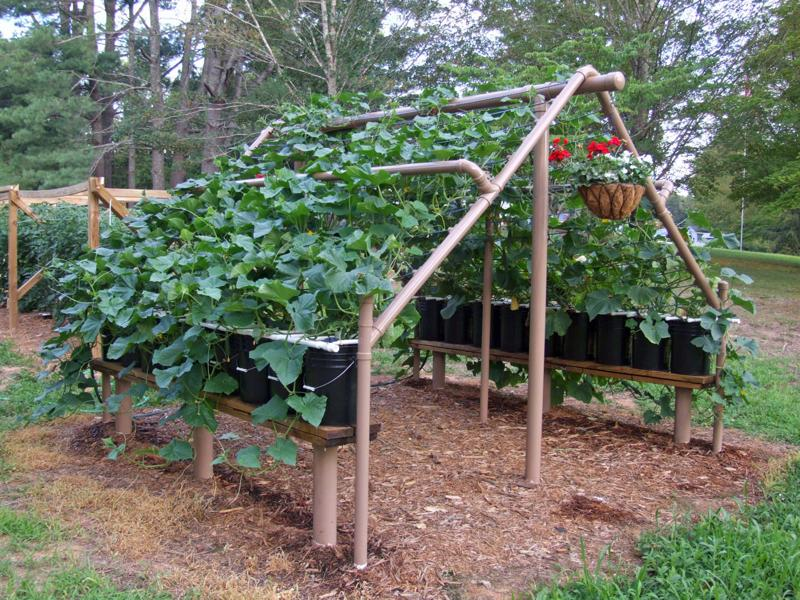 Build a PVC cucumber/vine trellis