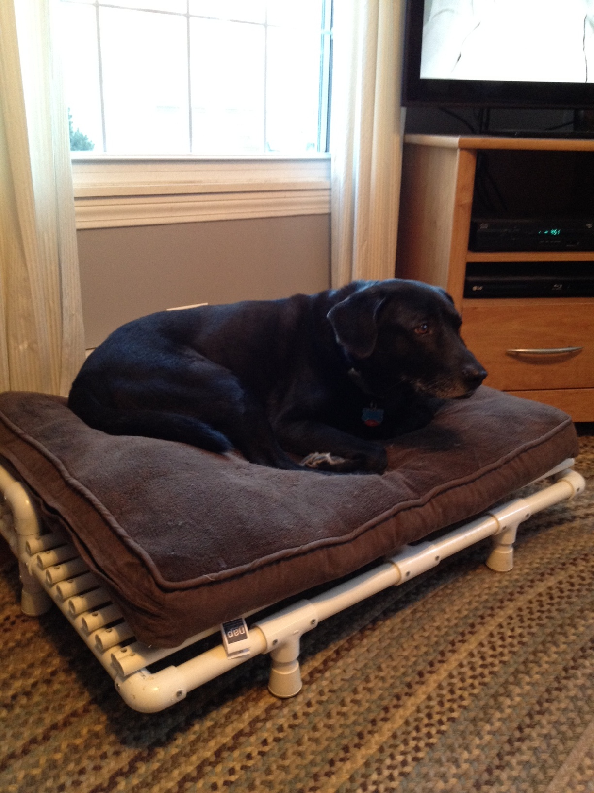 pictures of a build it yourself pvc raised dog bed. Black Bedroom Furniture Sets. Home Design Ideas
